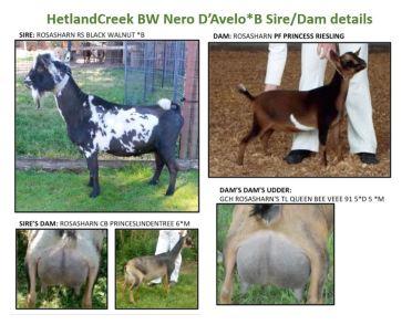 Nero's Sire/Dam details